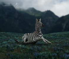 Out of Place by Aspasia-Project