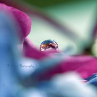 A drop of colour by K-Boyd-Photography