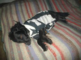 ZAGOR IS VERY TIRED AFTER CELEBRATING JUVENTUS by Oo-FiL-oO