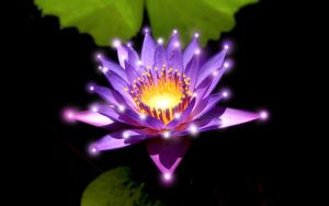LED Water Lily by operian