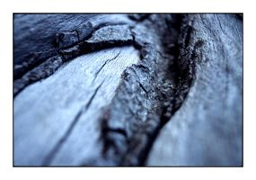 denmark - bark detail by redux