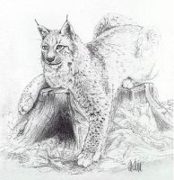 Lynx by Rockerz66