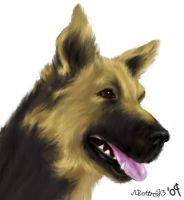 German Shepherd by moltres93