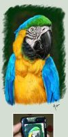 Parrot by mazhear