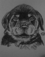 rottie puppy by sugarskull-tattoos