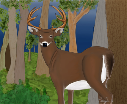 Whitetail by RachBurns