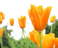 Orange_flowers by JULIAWA