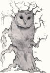 Owl Superstition by stardust12345