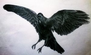 Crow by artwolf5