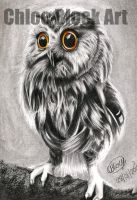 Owl by ItsCloctorArt