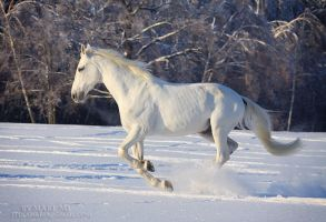 Winter gallop by mari-mi