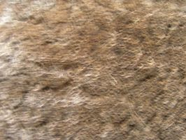 Brown Light Texture 02. by stock-basicality