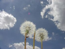 weeds by ExplodingMattresses