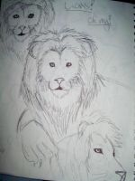 Lion Sketches by yaoilovr