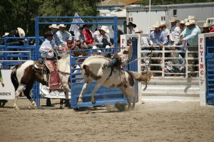 rodeo 29 by xbr0kendevotion