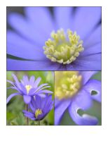 Flower Montage by ShineWithTheStars