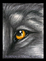Wolf Eye ACEO by InsaneRoman