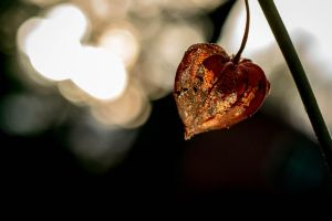 Decaying Heart by Garraz