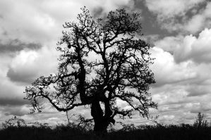 Gnarled Silhouette by greglief