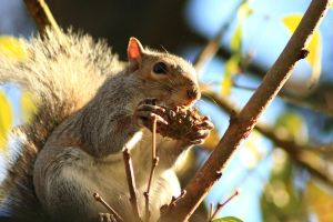 Squirrel Goodies by timseydell