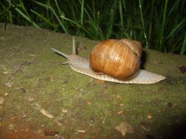 Snail collection 04 by Roack