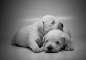 White in Black and white by Joseph-Belcher