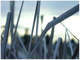 reeds by madFusion15