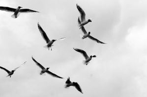 Take Flight by Hollud