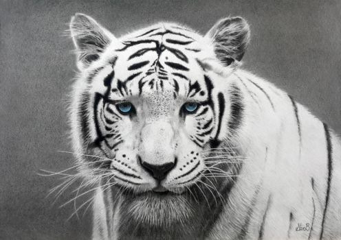 White Tiger by T45KM45T3R