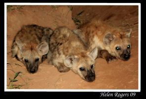Hyena Cubs by Helenr251