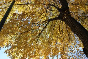 Fall leaves by Lady-Lilith0666