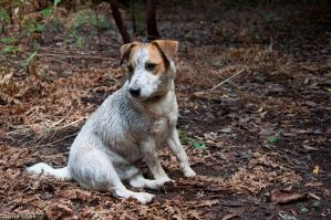 Terrier full of terre by dliche