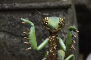 praying mantis soft sculpture by FushiaGold