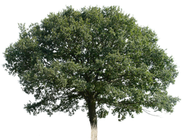 tree 16 png by gd08