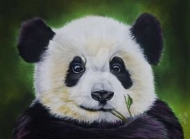 Cute Baby Panda Chewing On Bamboo by Pastel-Lover