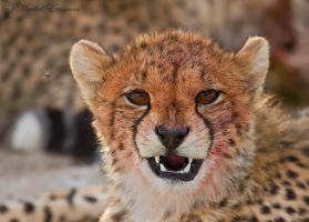 Satisfied Cheetah Cub by MorkelErasmus