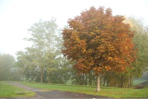 Young chestnut in misty park by steppelandstock