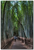 Bamboo forest path 2 by dragonslayero