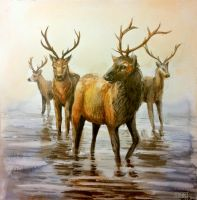 Deers by Mumium