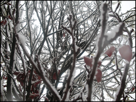 White Branches by caiterprince