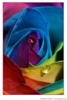 Happy Roses 7 by MarjoleinART-Photos