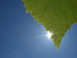 Leaf by speartime