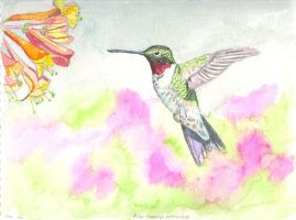 Ruby-throated hummingbird by hphase22