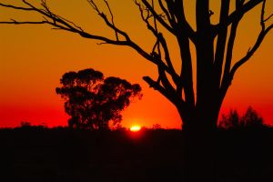 Sunrise - Deniliquin 2 by wildplaces