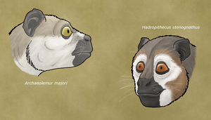 Archaeolemuridae, the 'monkey lemurs' by WSnyder