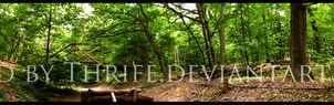 Woods Panorama by Thrife