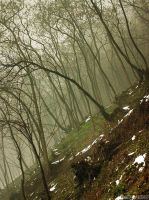 foggy forest by adypetrisor