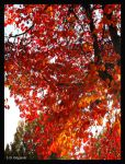 Tree of Flames by LetsAllBeNuerotic