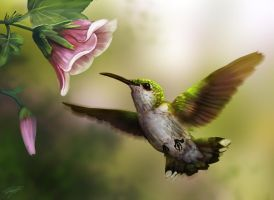 Hummingbird by Ruth-Tay