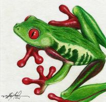 Colored Pencil Frog by kevin-john